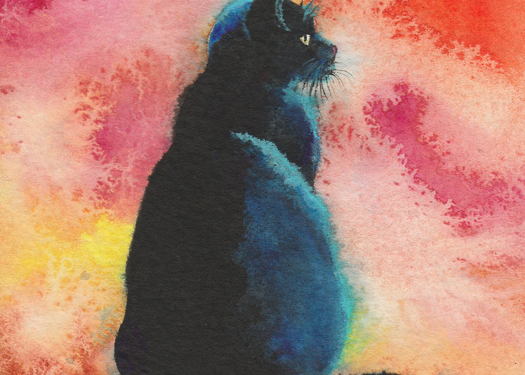 Black Cat - Midnight