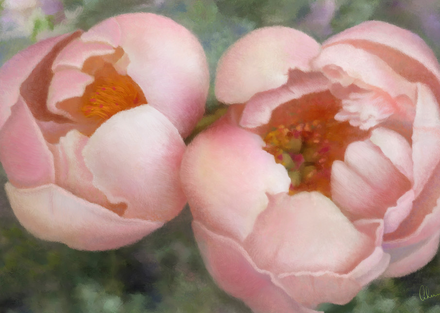 Maya's Coral Peonies, wall art. A print of an original painting by the artist, Mary Ahern.