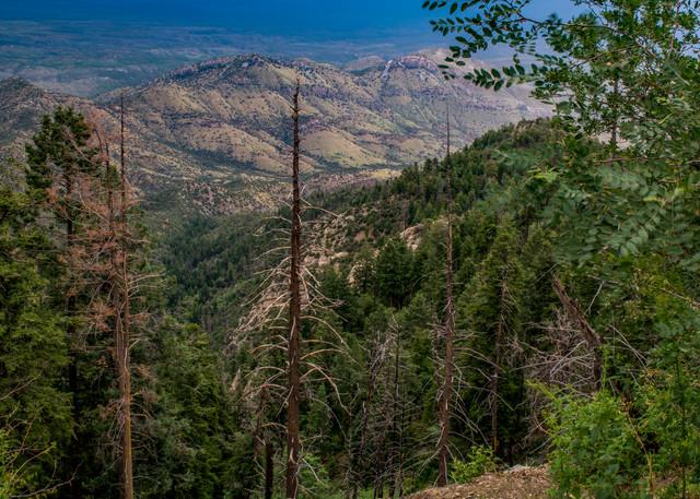 Mt. Lemmon, Tucson, Arizona, USA