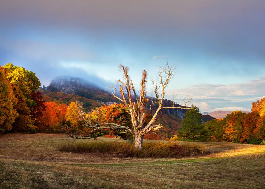 Bonticou Tree Art | Roost Studios, Inc.
