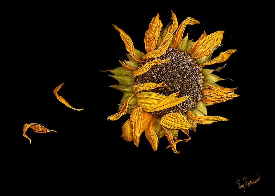 Flowers Aging Gracefully Art   FortMort Fine Art