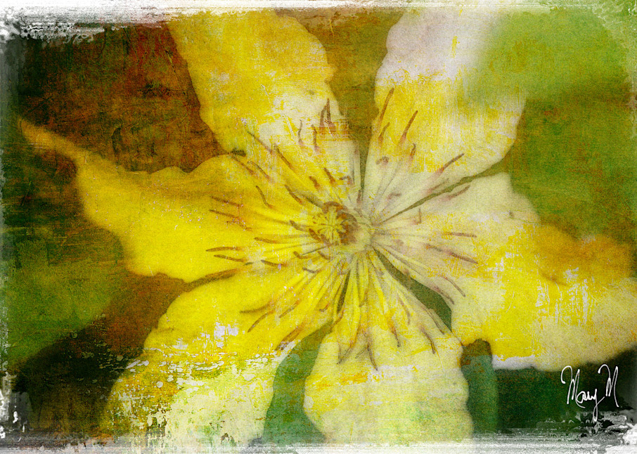 Flowers Sheer Delight Art | FortMort Fine Art