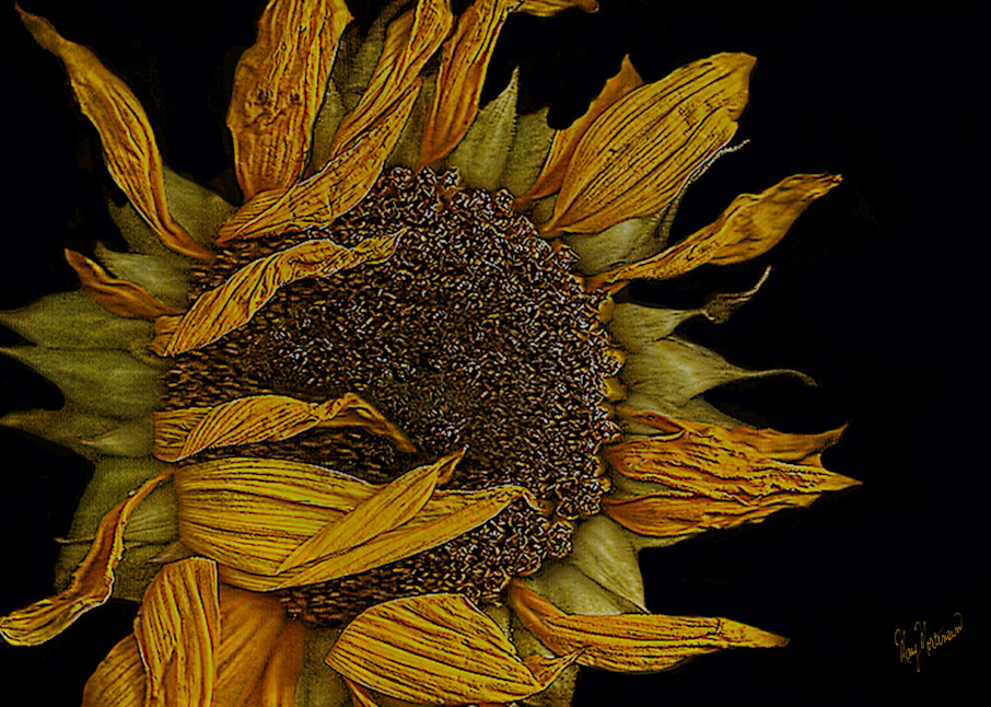 Flowers Whithered Art | FortMort Fine Art