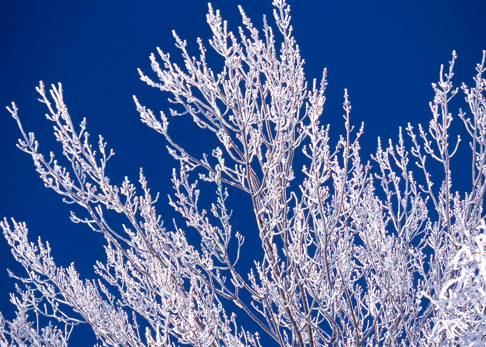 Ice Branches Art | Roost Studios, Inc.
