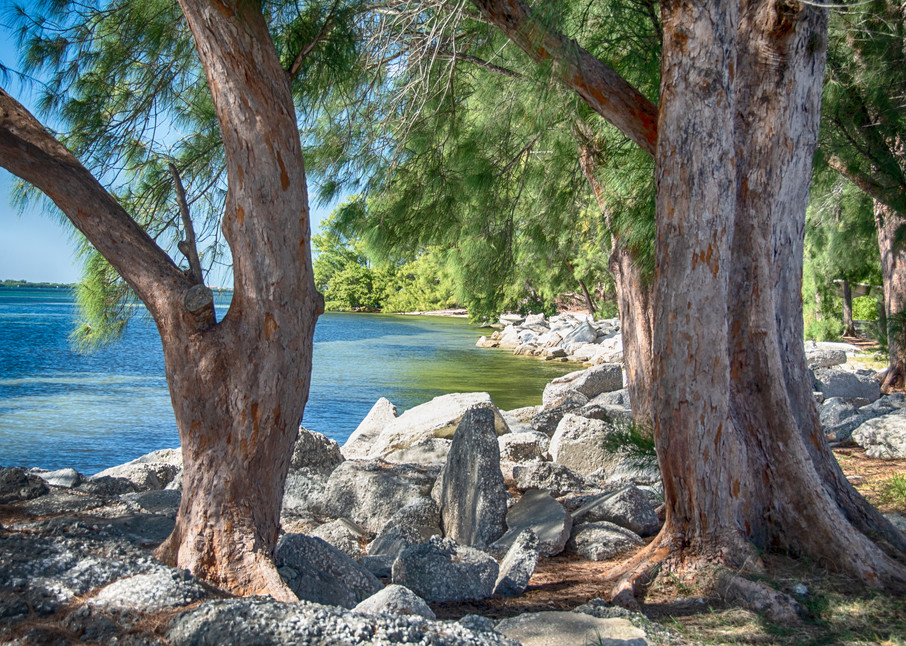 Gulf Bay Art | Artist David Wilson