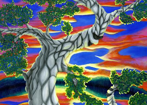 The Life Of Trees Art   Northwest Image