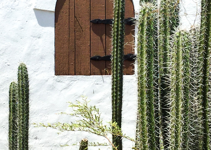 Cactus Gathering Photography Print | Gifts For Art Lovers