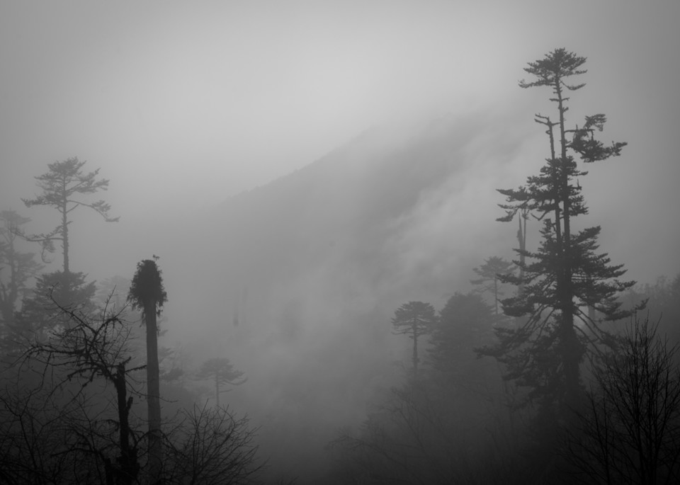 Foggy treetops | Black and White Landscape Photography