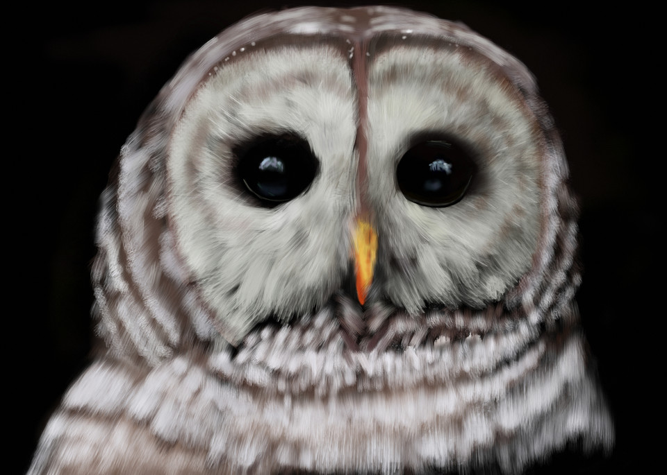 Crestwood Owl  Art   Dave Fox Studios