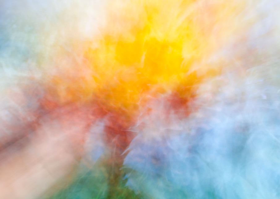 Morning Light Photography Art | allysonmagda