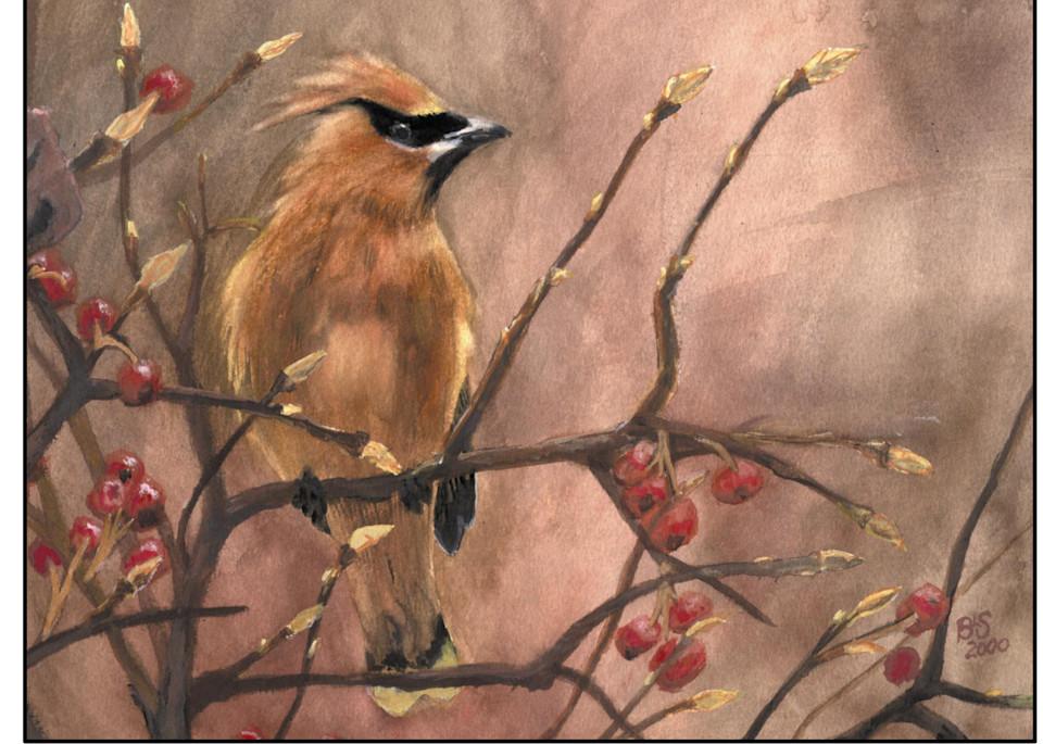 001 Cedar Waxwing Art | Blissful Bonita Art Studio & Gallery