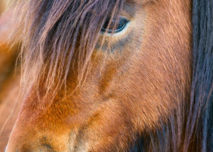 Pony's Gaze Art | The Carmel Gallery