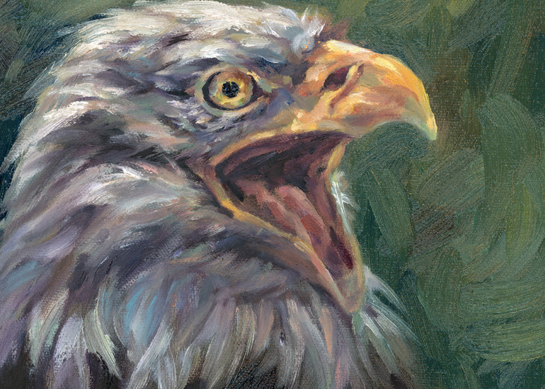 Crying eagle - a bald eagle portrait by Ans Taylor. Art prints of this oil painting are available