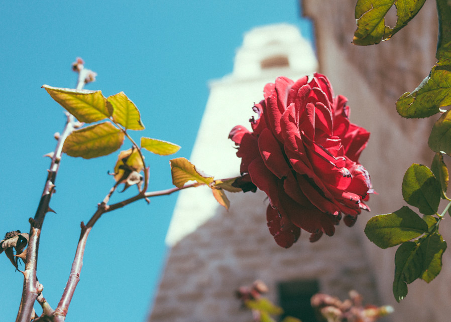 The Rose of Jacob's Well| Kirby Trapolino Fine Art Photography