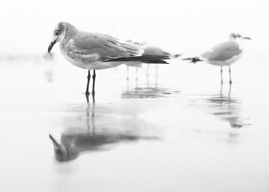 Contemplative Recollections| Kirby Trapolino Fine Art Photography