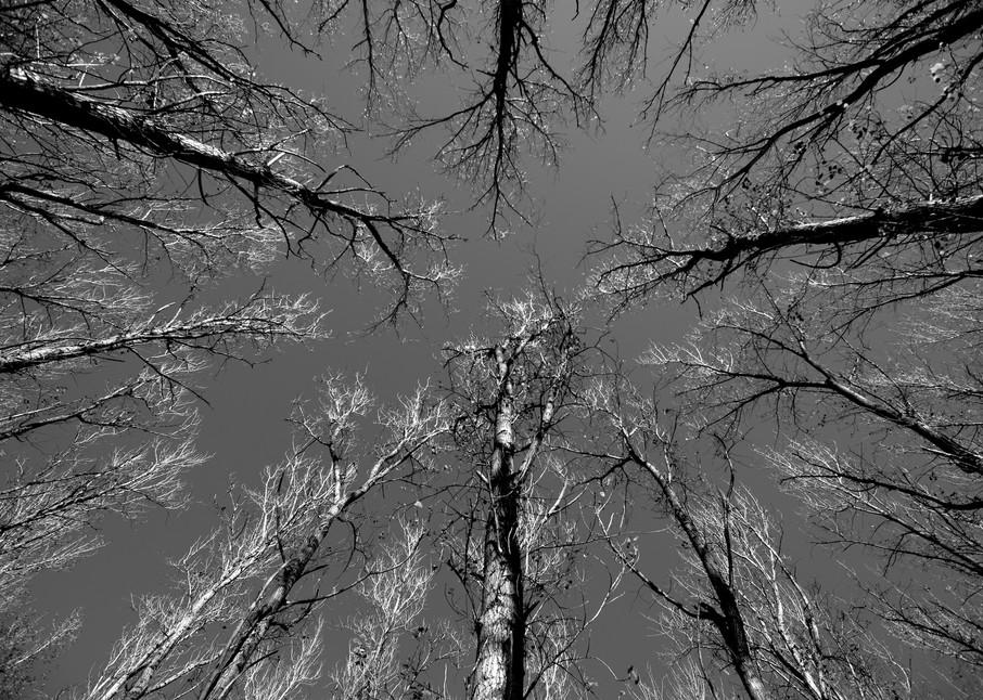 Reach - John Tucker Park Paterson Hunter Valley NSW Australia   Black & White