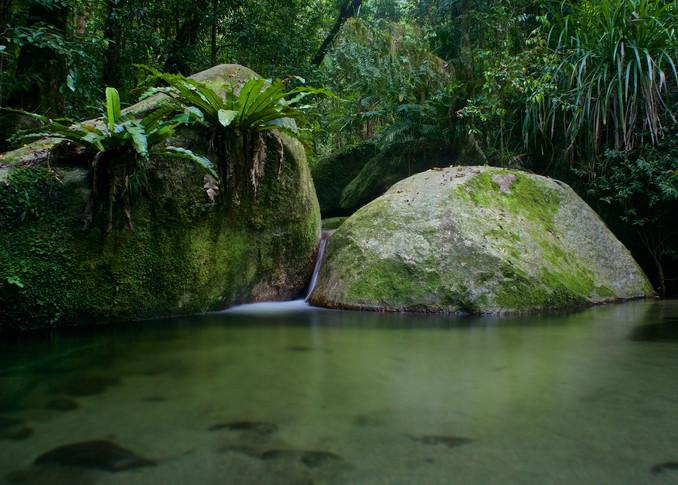Kuku Yalanji Dreaming - Mossman Gorge Daintree Rainforest Queensland Australia | Limited Edition Dreamtime