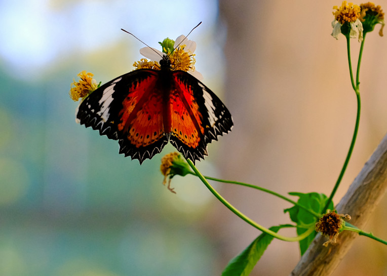 Flowers and Butterflies-59