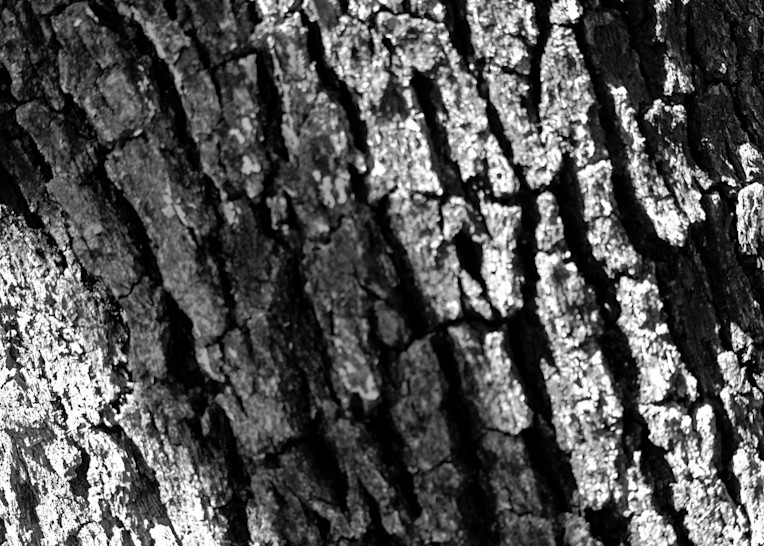 Fort Worth Nature Center 102 Photography Art   Drone Video TX