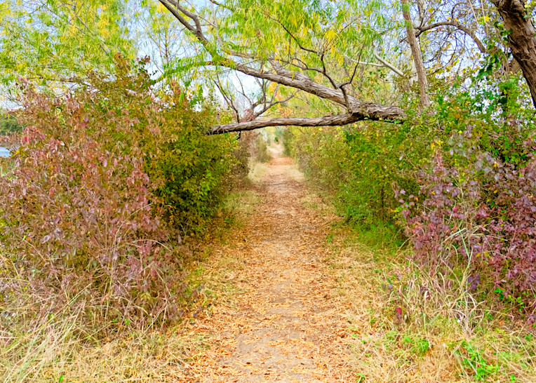 Fort Worth Nature Center 238 Photography Art | Drone Video TX