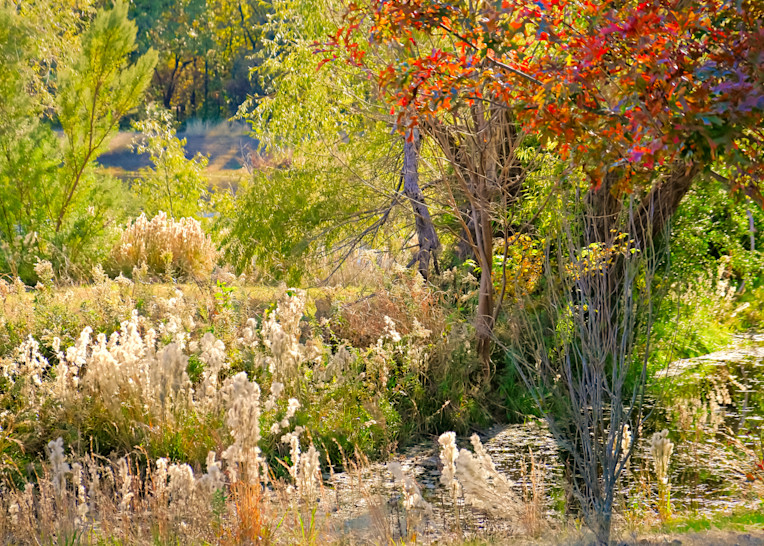 Texas Pond in Autumn