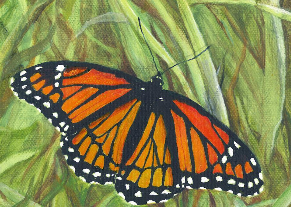 viceroy butterfly orange black