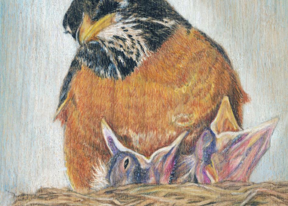 robin baby birds art nature songbirds