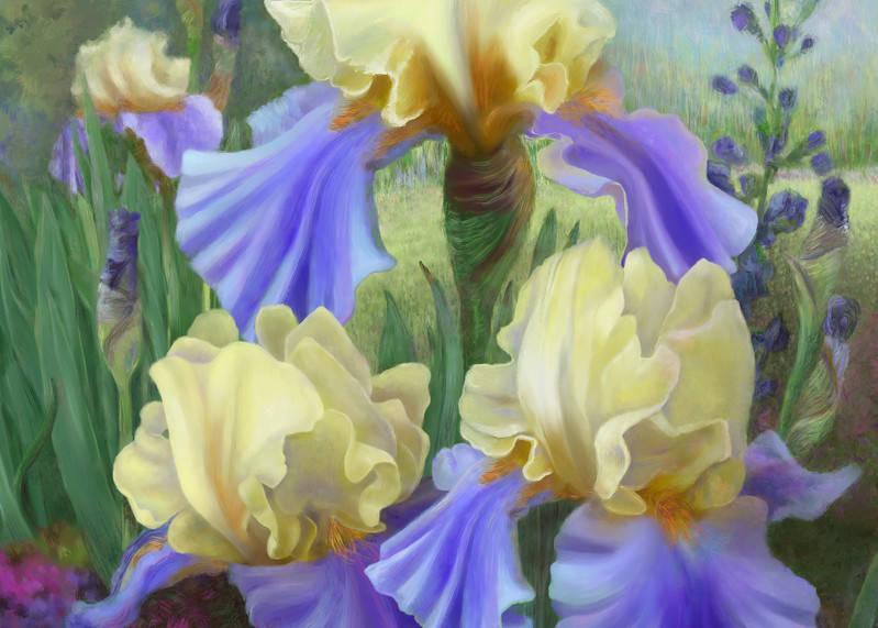 Ellen's Irises meal wall art. Aluminum Prints by the artist, Mary Ahern.