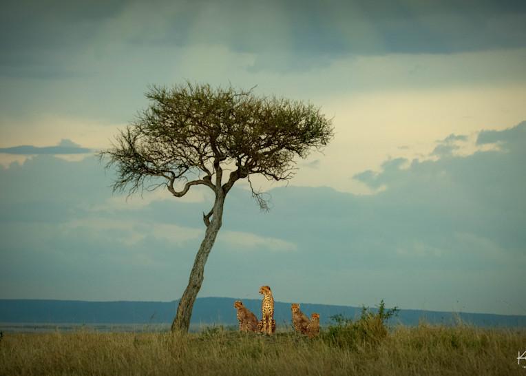 Africa Landscape  5964 Photography Art | Images2Impact