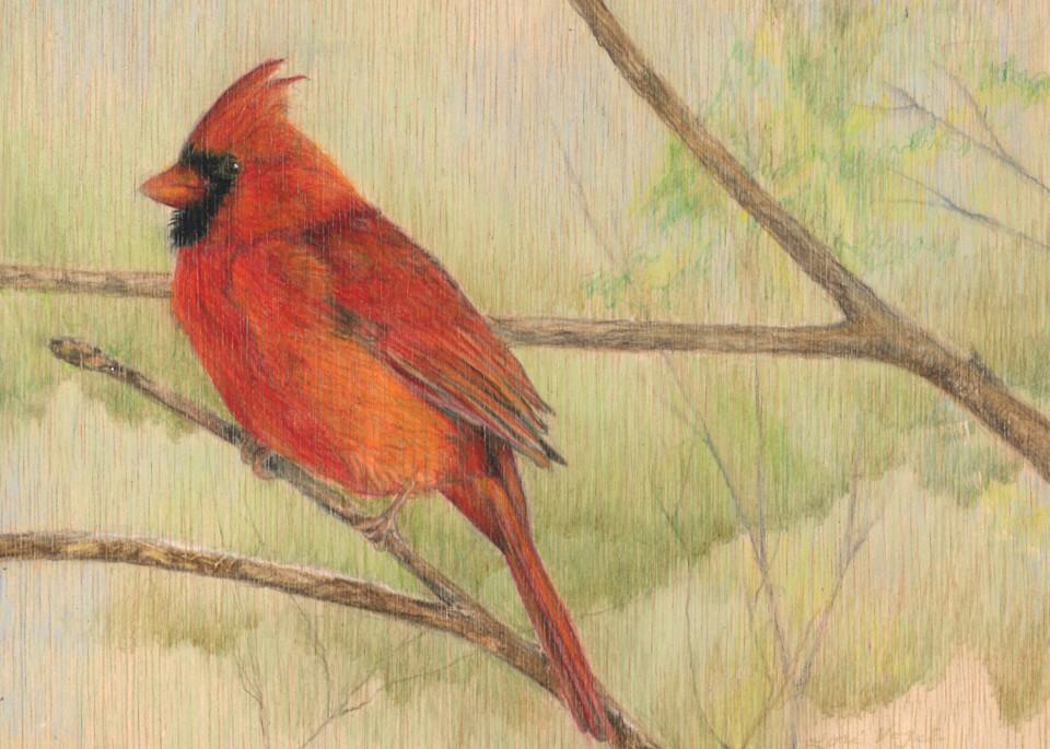 Cardinal bird songbird drawing art Artstorefronts redbird