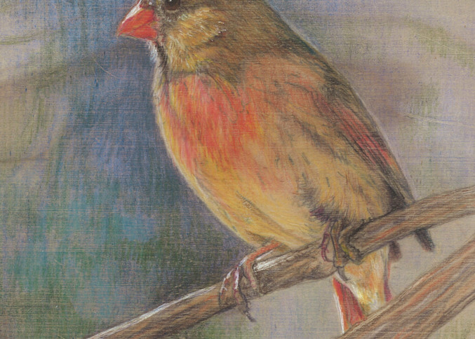 Female Cardinal Art   Lori Vogel Studio
