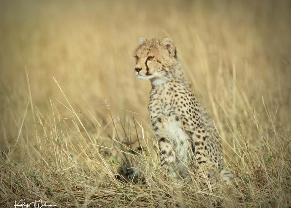 Kenya Cheetah 3829 Photography Art   Images2Impact