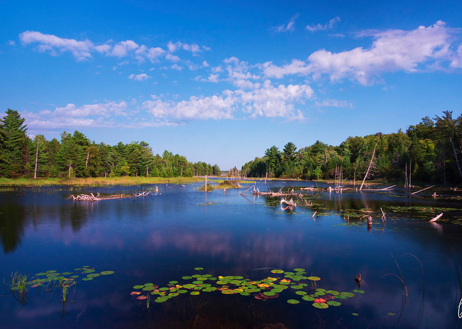 Constance Mier Photography - Michigan nature and wildlife