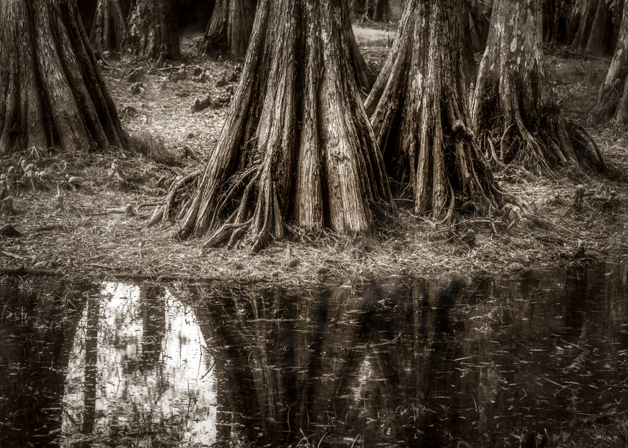 Cypress Island Louisiana swamp photography rint