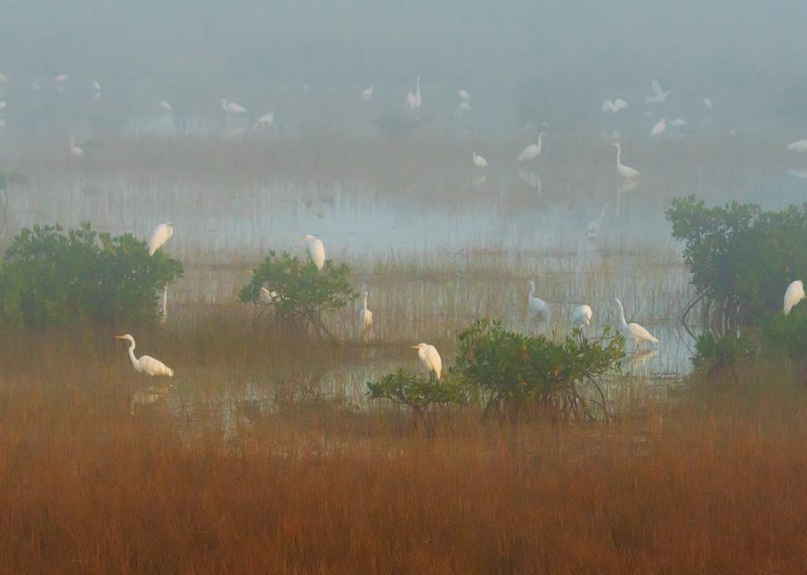 Constance Mier Photography - fine art Florida birds