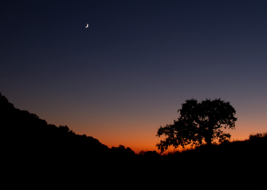 sunset-tree-and-moon