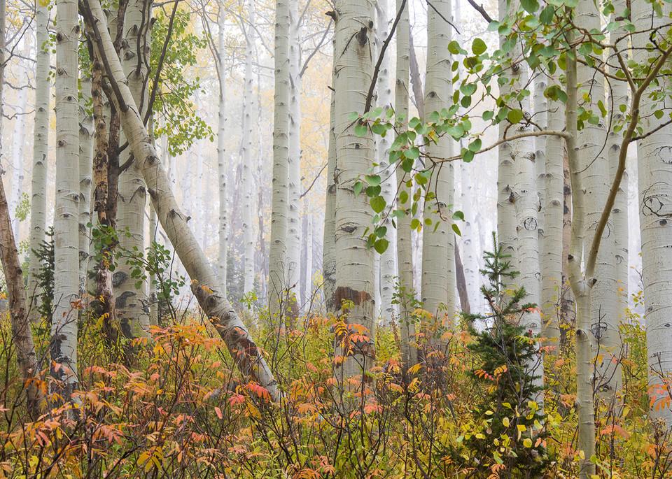 Aspen Pastel Photo Print