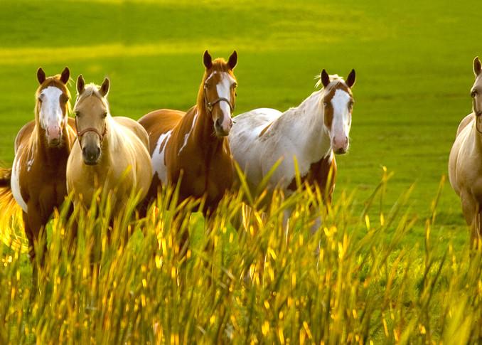 Greener Pastures Pano Photo Print