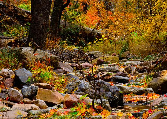 Workmans Creek Photo Print