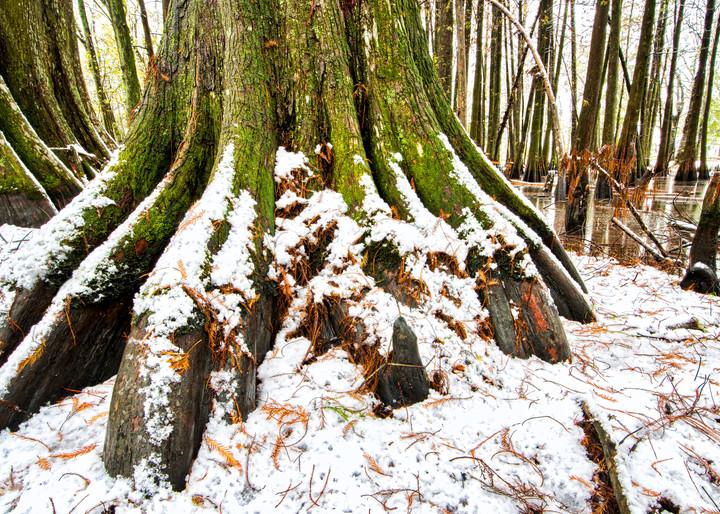 Cajun snowfall swamp photography