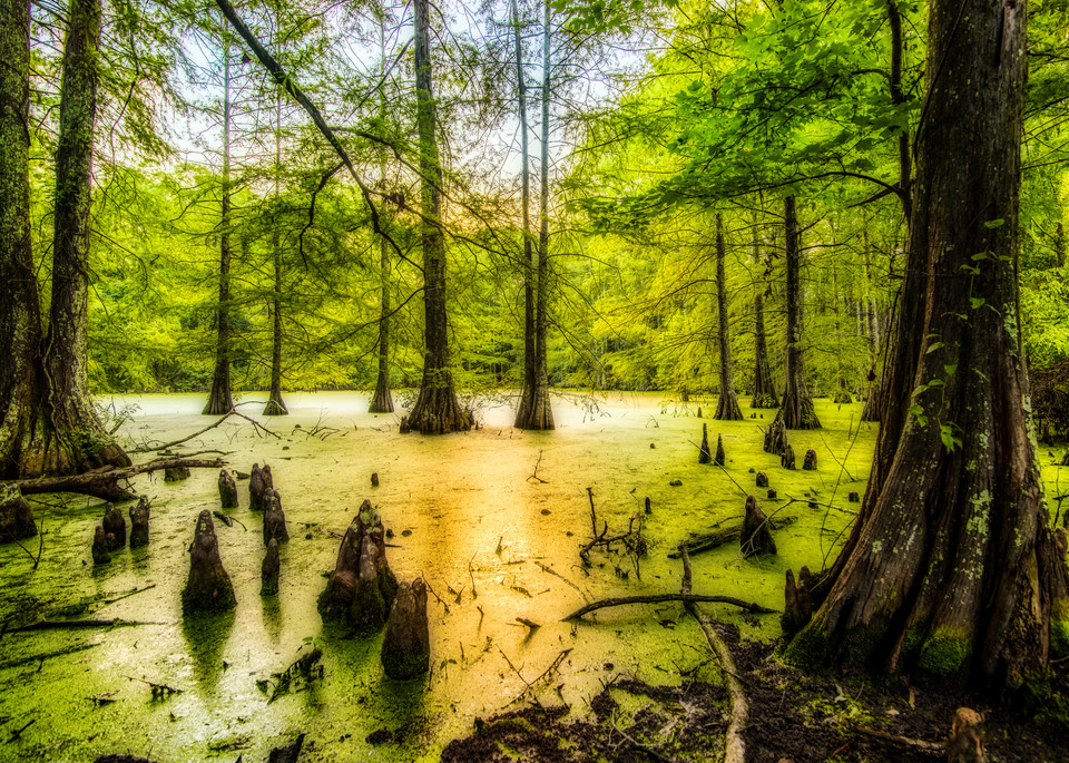 Dreams of the Swamps photography prints