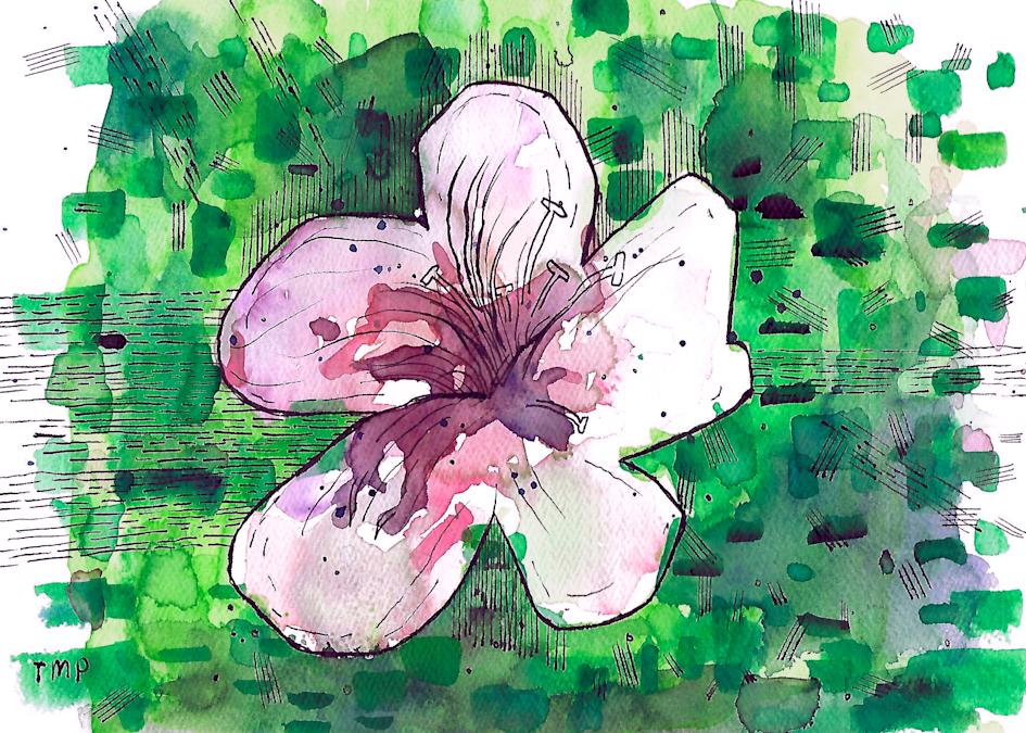 Matt Pierson Artworks | Experimental Flower with Green background