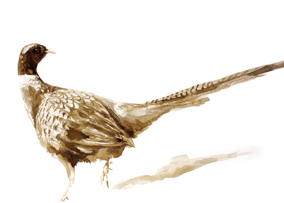 Sk Pheasant   Print Art | Lauren Daae