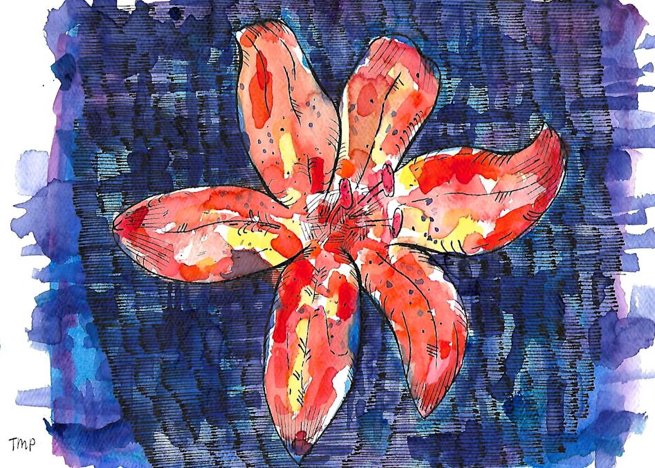 Matt Pierson Artworks   Orange Red Flower