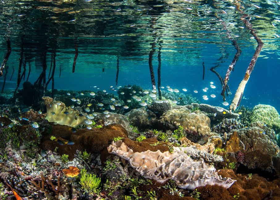 Mangrove Nursery is a fine art underwater photograph for sale