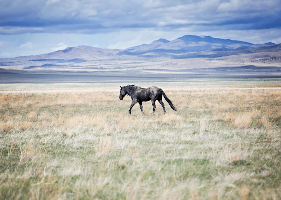 The Journey Art | Sierra Luna Photography