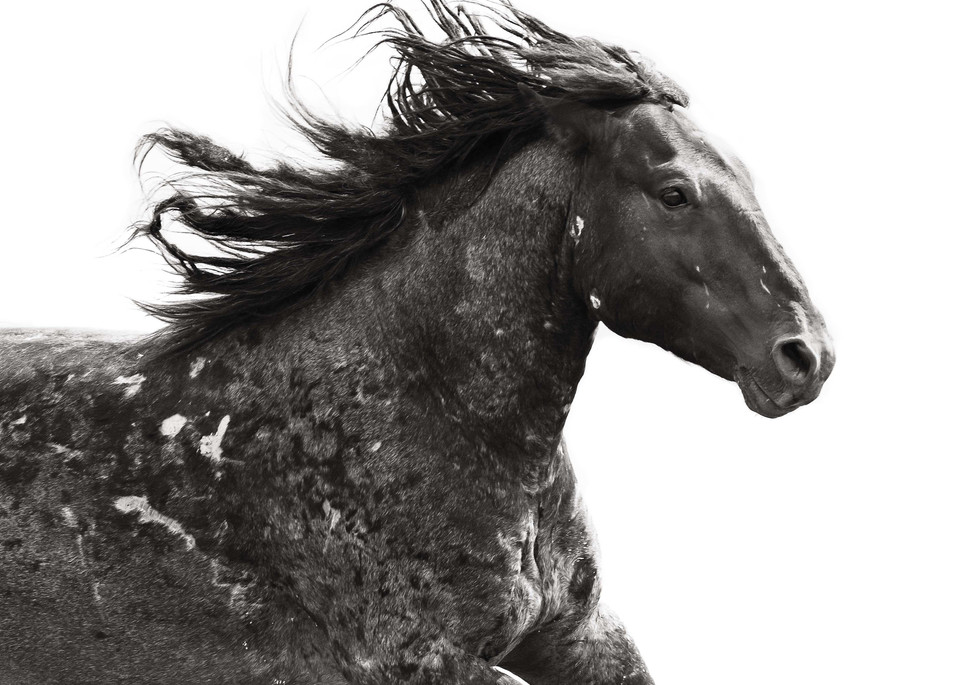 Freedom Art | Sierra Luna Photography