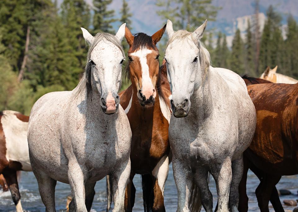 Wyoming Trio Art | Sierra Luna Photography