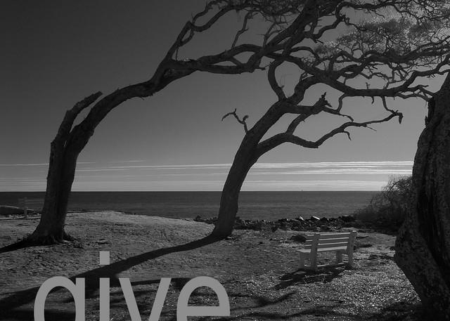 Never Ever Give Up Photography Art | Robert Jones Photography