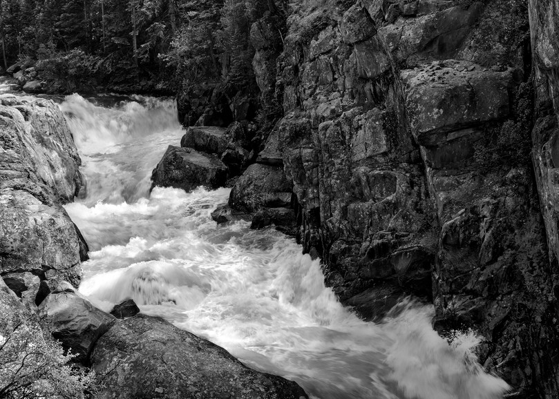 If You Love Trees - bw Collection | Poudre Rapids-bw, a fine art black and white photograph by David Zlotky